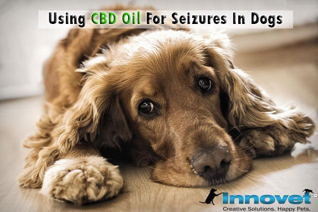 Using CBD Oil For Seizures In Dogs