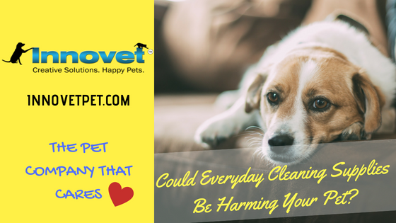 Could Everyday Cleaning Supplies Be Harming Your Pet?