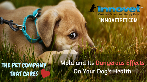 Mold and Its Dangerous Effects On Your Dog's Health