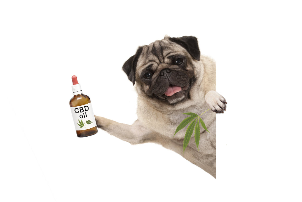 What You Need To Know About CBD Oil For Your Pets