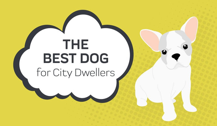 The Best Dogs for City Dwellers