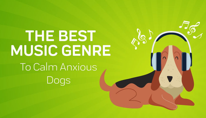 This Genre of Music Is Best for Calming Anxious Dogs