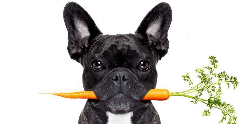 What Fruits and Vegetables Can Dogs Eat?