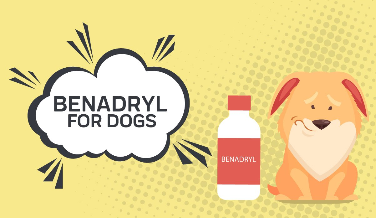 Benadryl For Dogs Is It Okay For Your Dog Innovet Pet