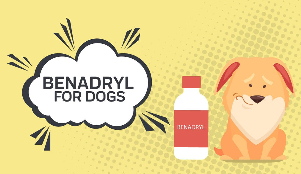 Benadryl For Dogs: Is it Okay for Your Dog?