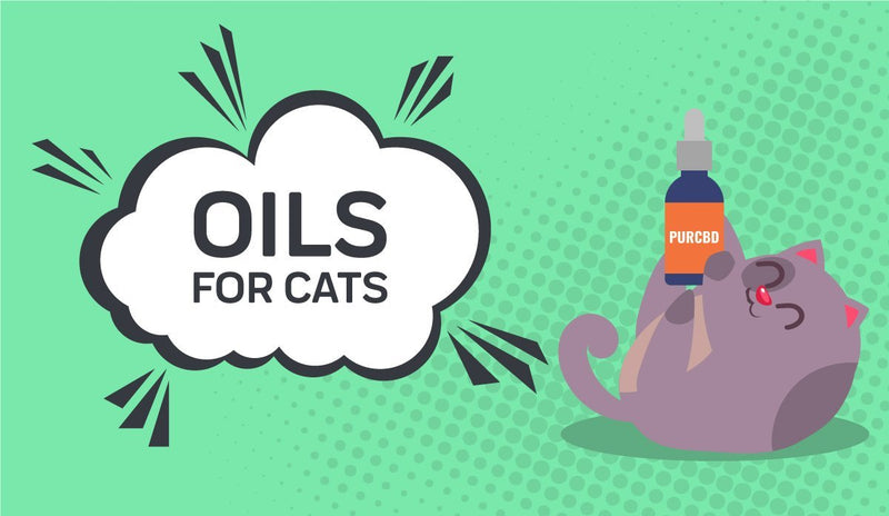 Guide to CBD Oil For Cats - Everything You Need To Know