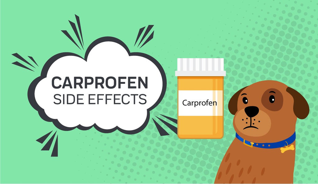 Carprofen For Dogs: The Side Effects To Be Aware Of