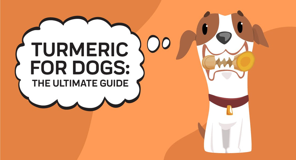 Turmeric For Dogs: The Ultimate Guide