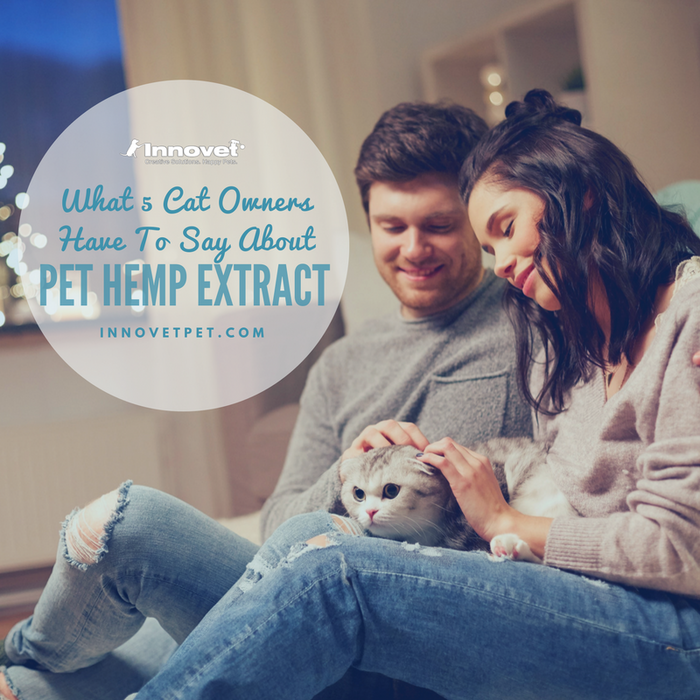 What 5 Cat Owners Have To Say About Pet Hemp Oil