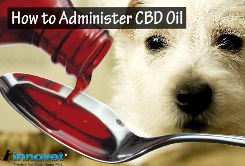 Complete Health Throughout The Day: When and How to Administer Hemp Oil