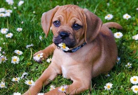Why You Need To Protect Your Puppy From Fleas Naturally