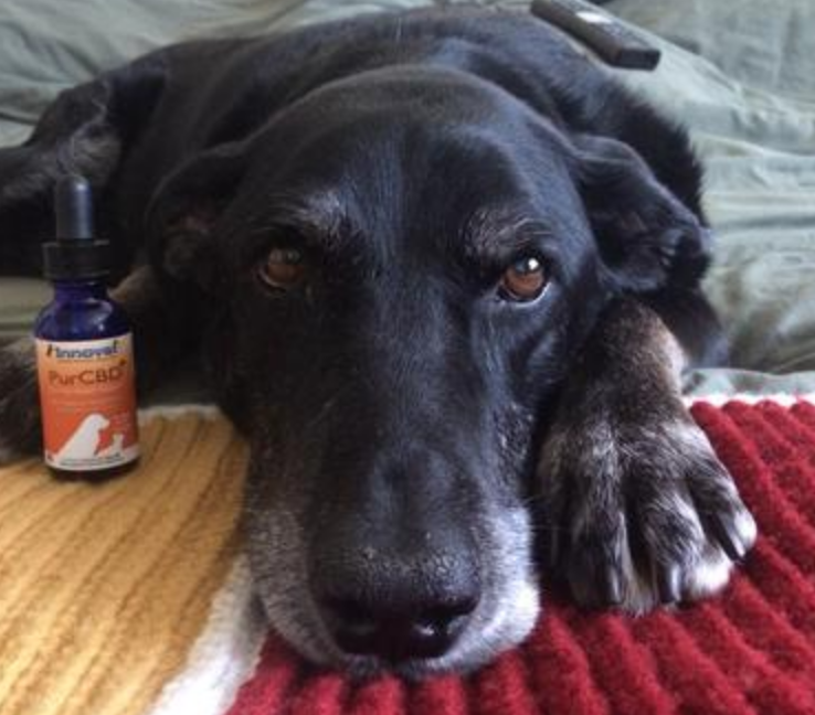 How pet Hemp Oil Can Help Your Pet: 5 Reasons To Give It A Try