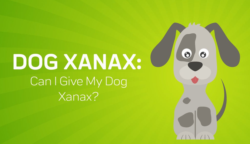 Can I Give My Dog Xanax?  Natural Alternatives for Dog Xanax