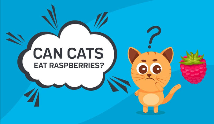 Can Cats Eat Raspberries