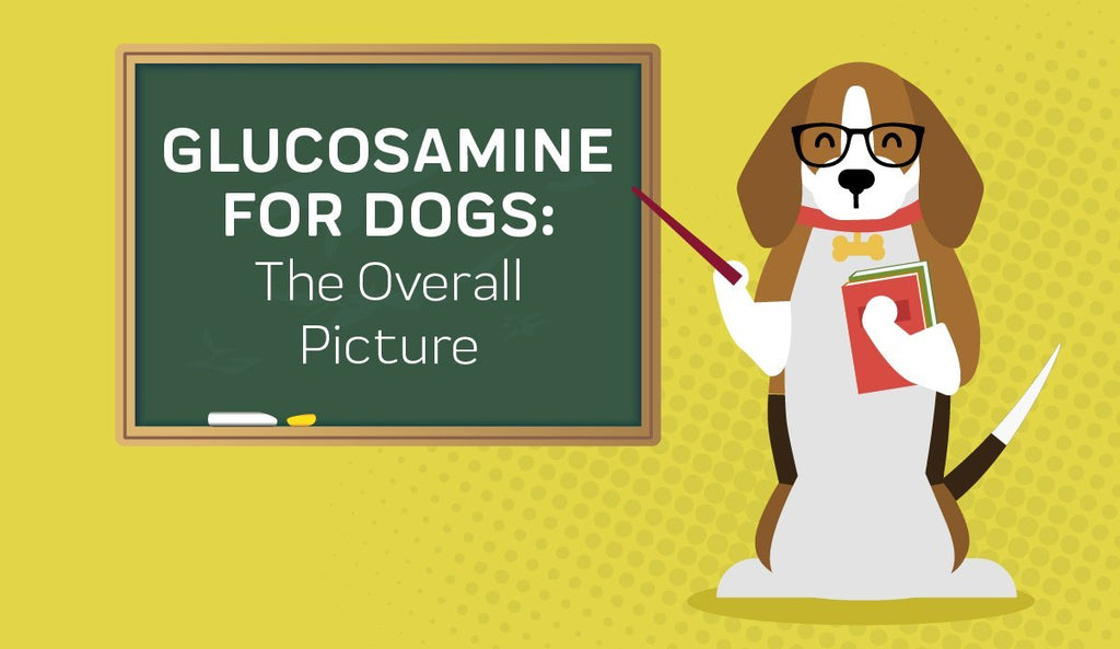 Glucosamine For Dogs: The Overall Picture