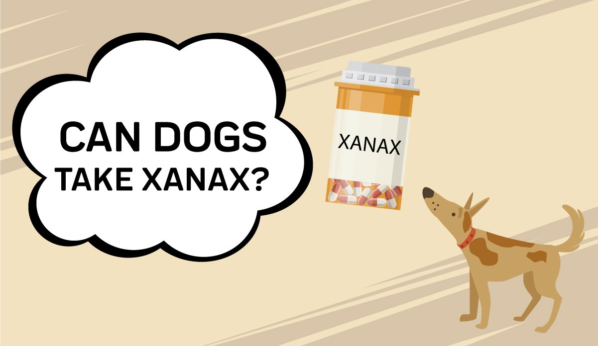 Can I Give My Dogs Xanax?