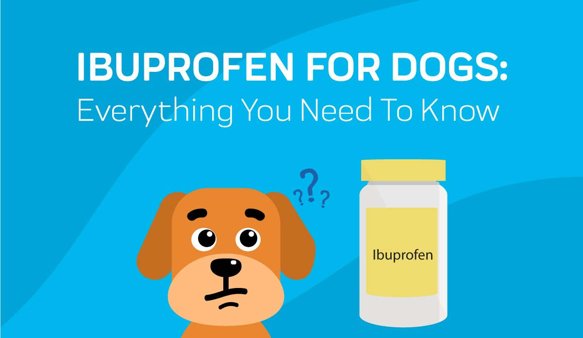 Ibuprofen For Dogs Everything You Need To Know Innovet Pet