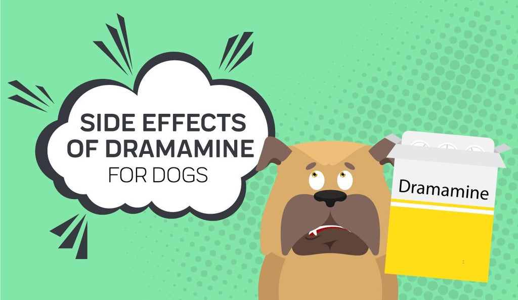Dramamine For Dogs: Everything You Need To Know — Innovet