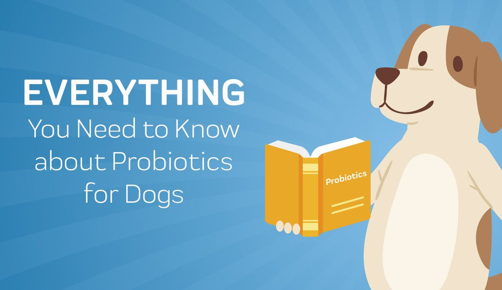 Everything You Need to Know about Probiotics for Dogs