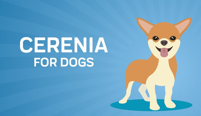 Cerenia for Dogs