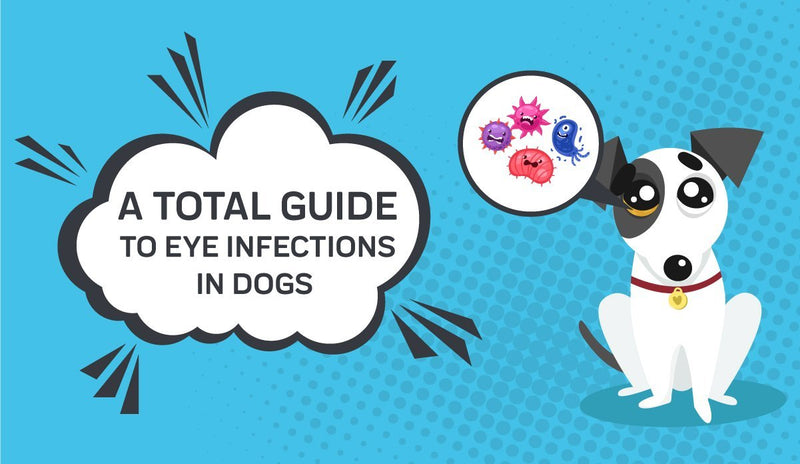 A Total Guide to Eye Infections in Dogs