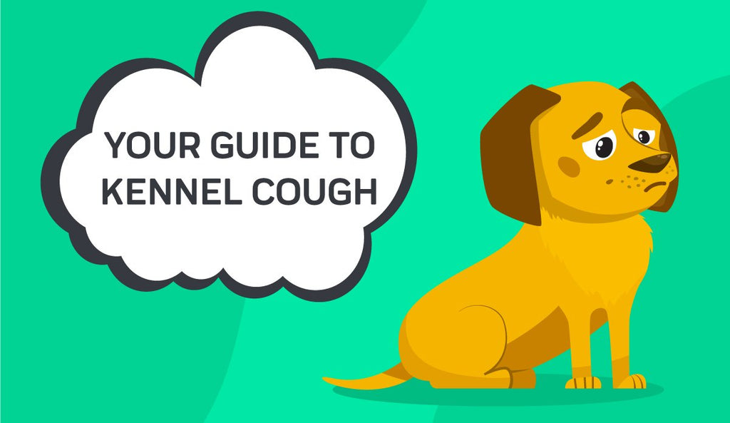 Your Guide To Kennel Cough
