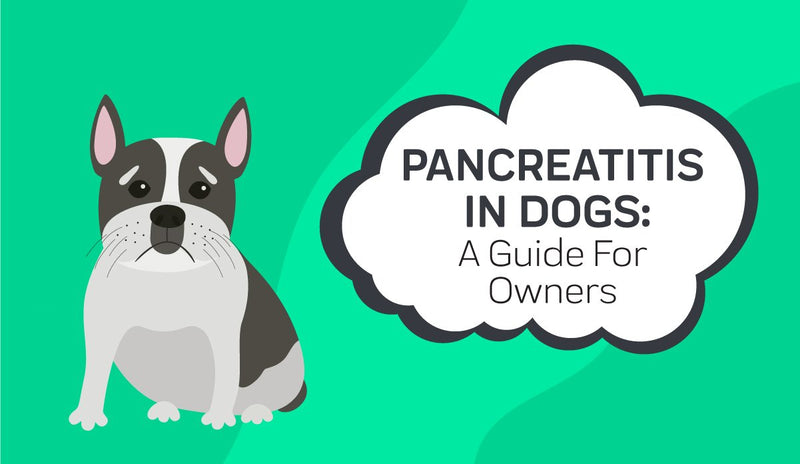 Pancreatitis in Dogs: A Guide For Owners