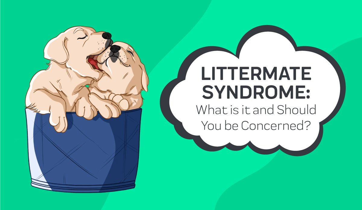 Littermate Syndrome: What is it and Should You be Concerned?
