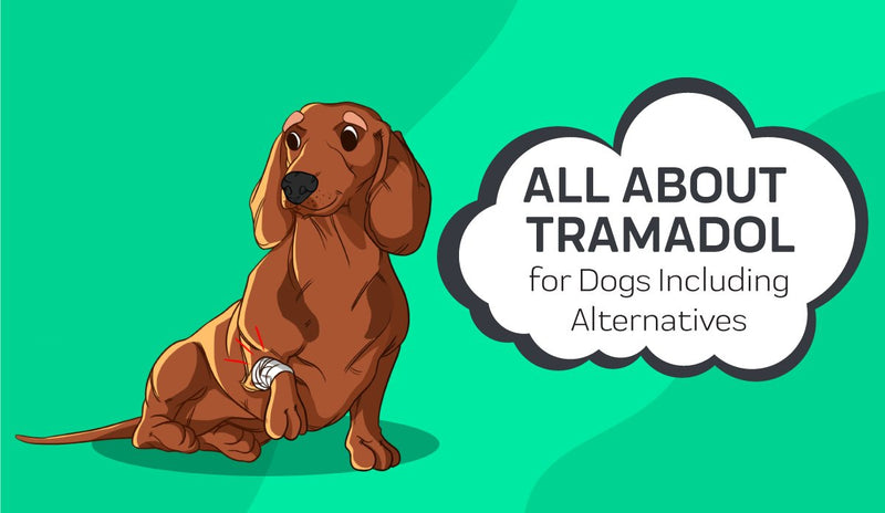 All About Tramadol for Dogs Including Alternatives