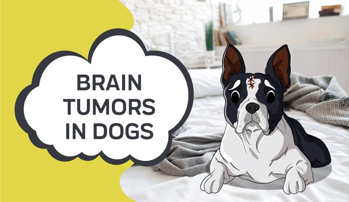 Brain Tumors in Dogs