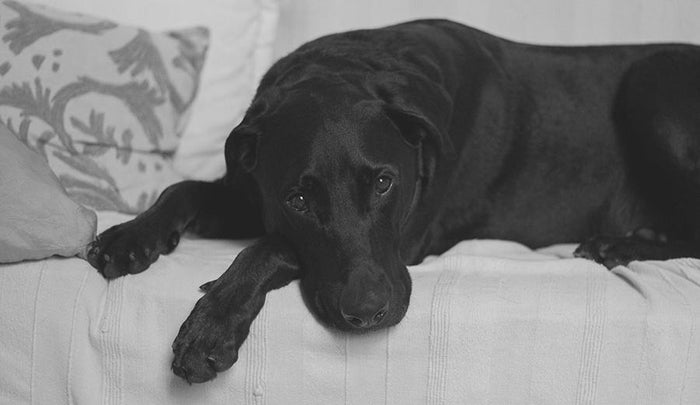 What To Know About Dogs and Sleeping Disorders