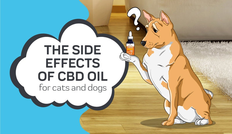 The Side Effects of CBD Oil for Dogs and Cats