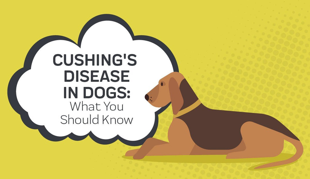 Cushing's Disease In Dogs: What You Should Know