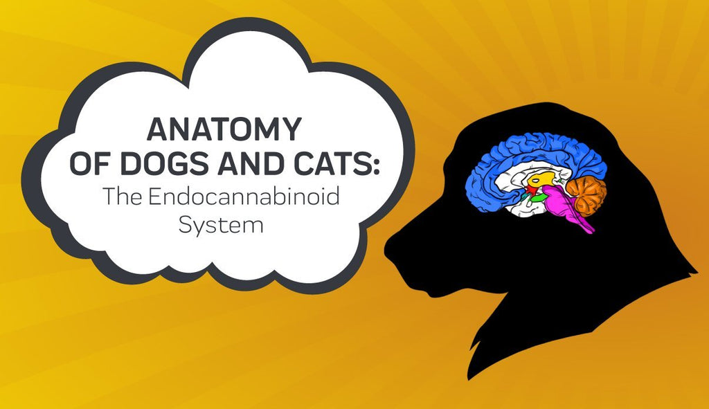 Anatomy of Dogs and Cats: the Endocannabinoid System