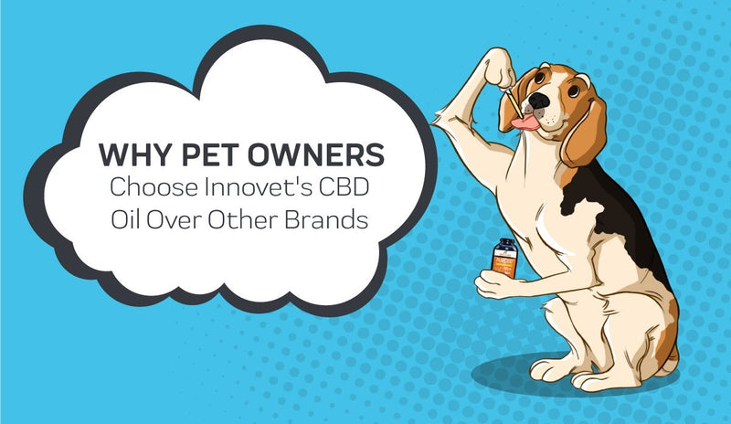 Why Dog and Cat Owners are Choosing Innovet's CBD Oil?