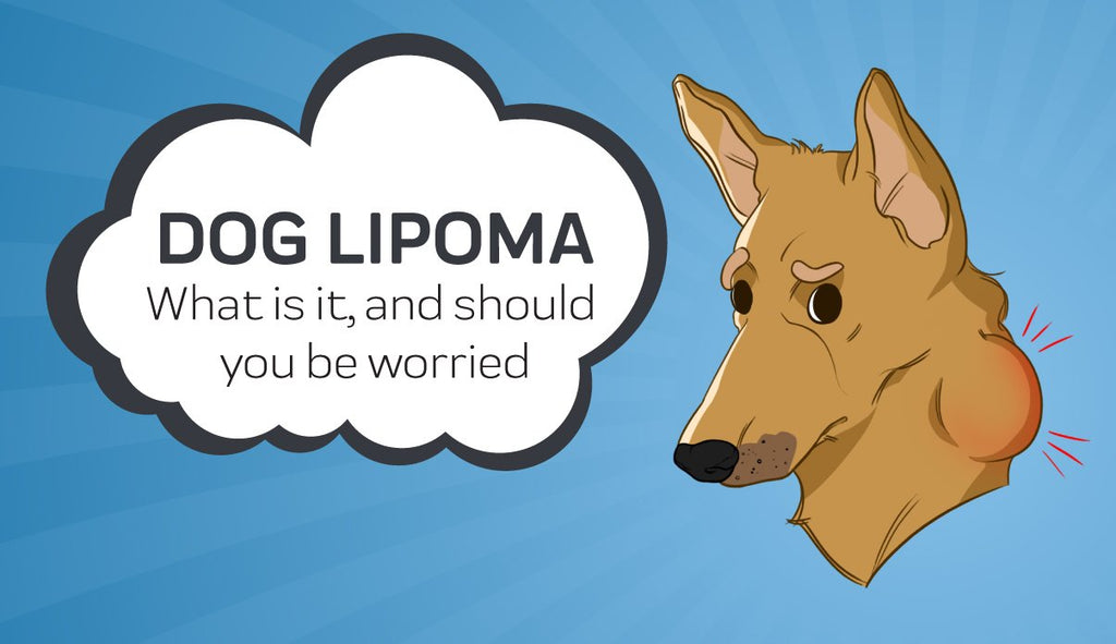 Dog Lipoma: What is it and Should You be Worried?