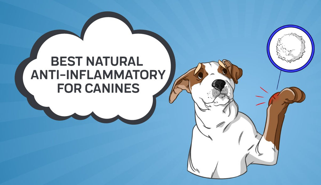 What is the Best Natural Anti-Inflammatory for Canines?
