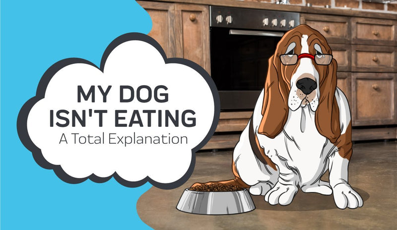 My Dog Isn't Eating: A Total Explanation