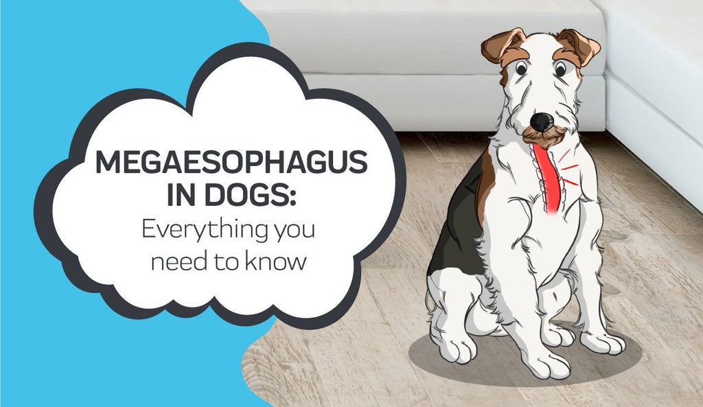 Everything you Need to Know About Megaesophagus in Dogs