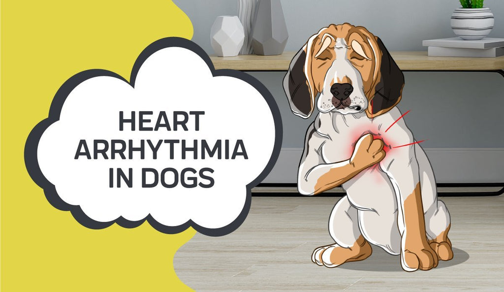 Heart Arrhythmia in Dogs