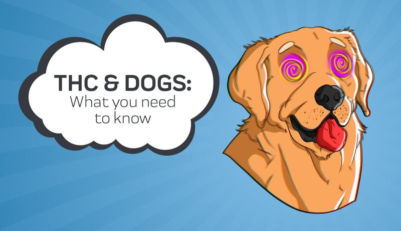 THC and Dogs: What You Need to Know