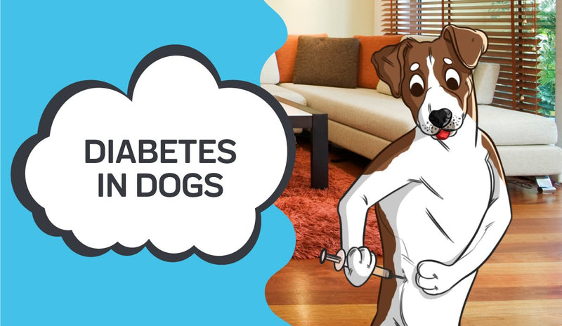 Managing Diabetes for Dogs