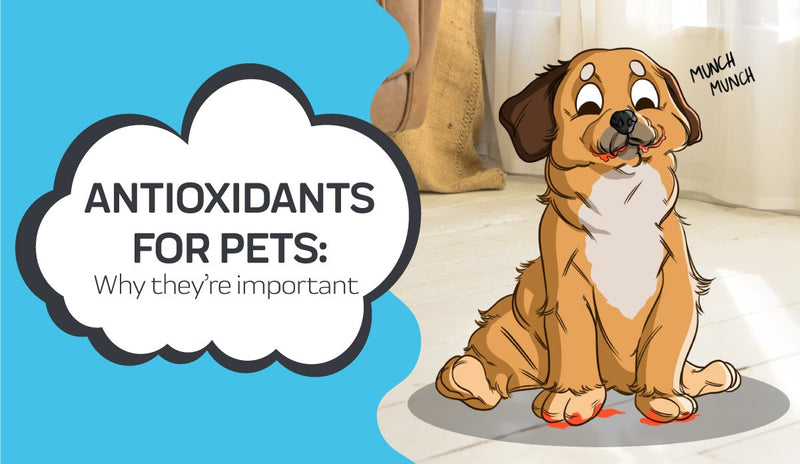 Why are Antioxidants Important for Pets