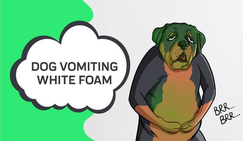 Dog Vomiting White Foam