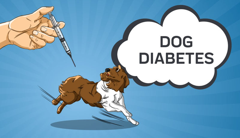 What You Need to Know About Your Dogs Diabetes