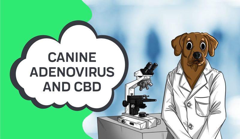 Canine Adenovirus and How CBD May Help