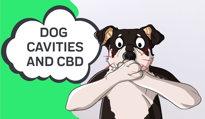 How to Treat Dog Cavities and How CBD Can Help