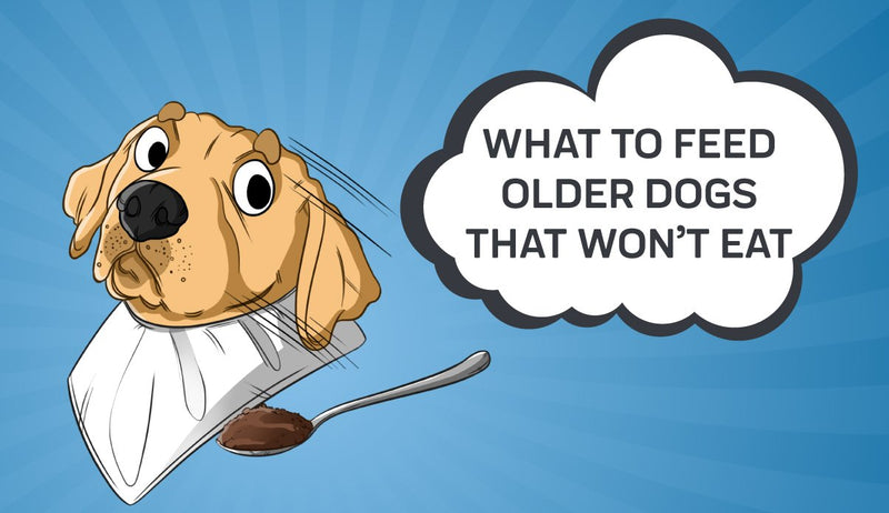 What to Feed Older Dogs That Won't Eat