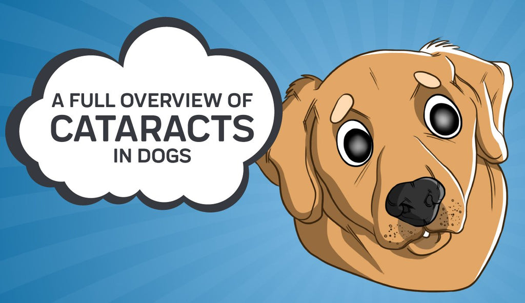 A Full Overview of Cataracts in Dogs