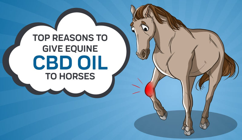 Top Reasons To Give Equine CBD Oil To Horses